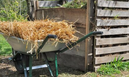Ranking: kompostownik 2021 – Najlepsze kompostowniki do ogrodu