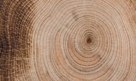 Ranking: łuparka do drewna 2021